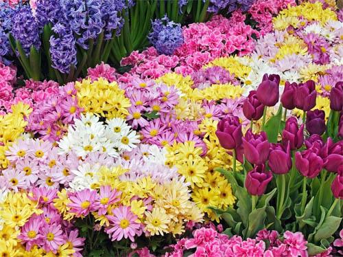 Выращиваем цветы на даче: секрет успеха