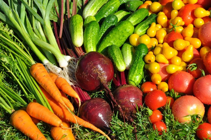 Покупка семян овощей в интернете