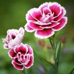 Какие цветы пользуются спросом?