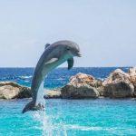 Будущей весной в Крыму заработает «скорая помощь для дельфинов»