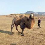 Состарился, заболел и оказался не нужен. Кто и как спасает животных в Крыму