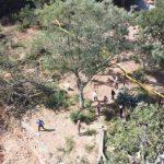 По факту вырубки деревьев в Казачьей бухте Севастополя возбуждено уголовное дело