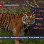 Традиционный подсчёт животных проводит Лондонский зоопарк