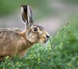 Охота на зайца в крыму