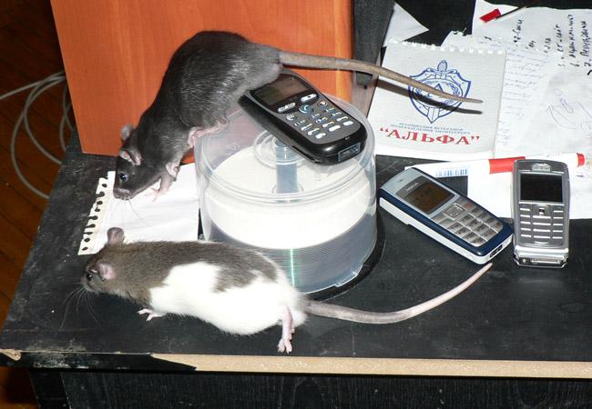 Уничтожение крыс. Центр дезинфекции и гигиены Москвы и Московской области