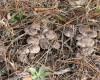 Степные грибы в Крыму