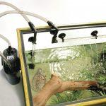 Обеспечение качества воды в аквариуме. Как это сделать правильно