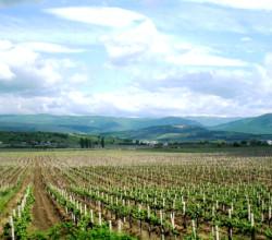 Виноград сорта в Крыму