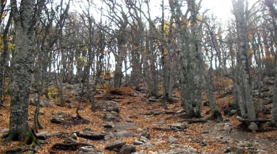 Горный лес на Ай-Петри