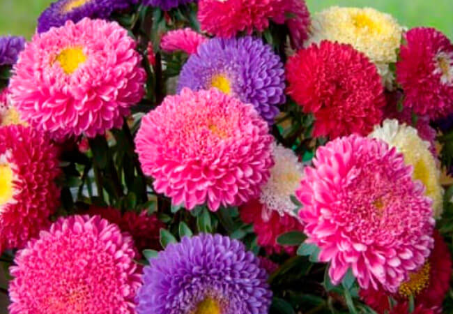 Дарите девушкам эмоции! Заказ букет цветов из роз, хризантем