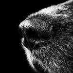 Зоозащитники: в Севастополе на пожаре в собачьем приюте пострадали животные