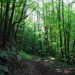 Байдарская долина одно из красивейших мест Крыма