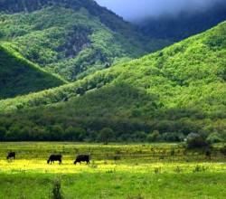 Живописные пастбища Байдарской долины