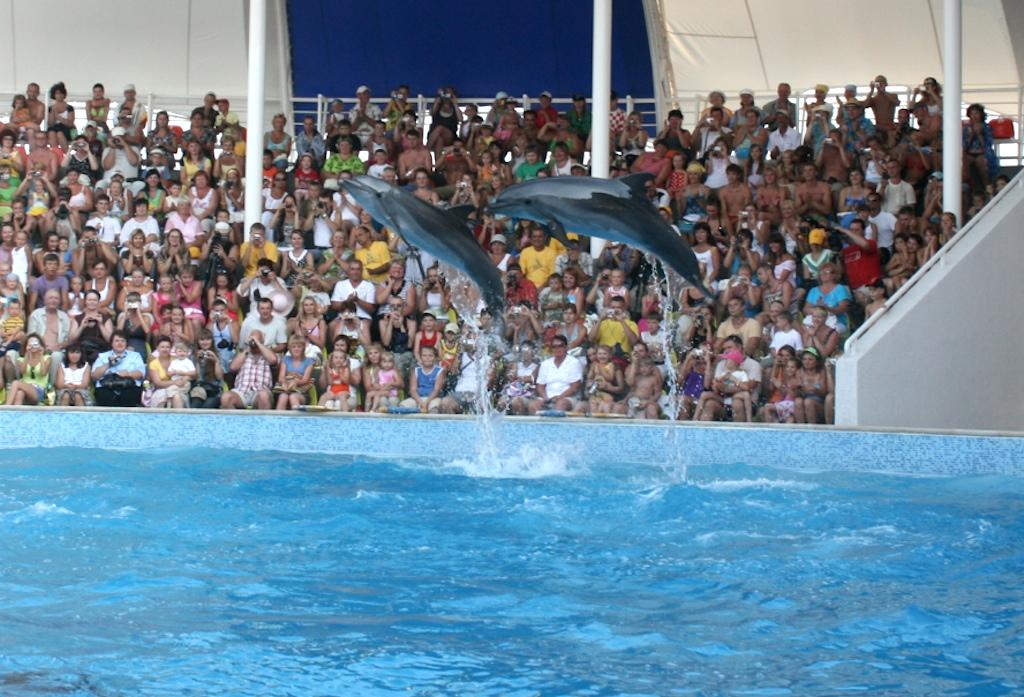 Шоу черноморских дельфинов