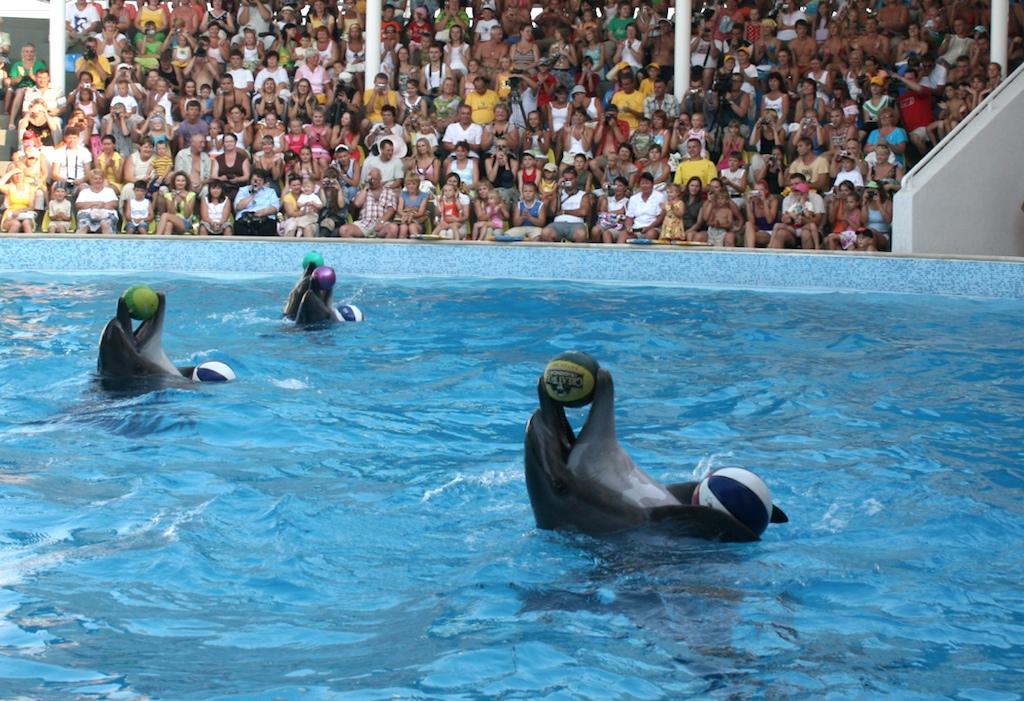 Шоу дельфинов в Крыму