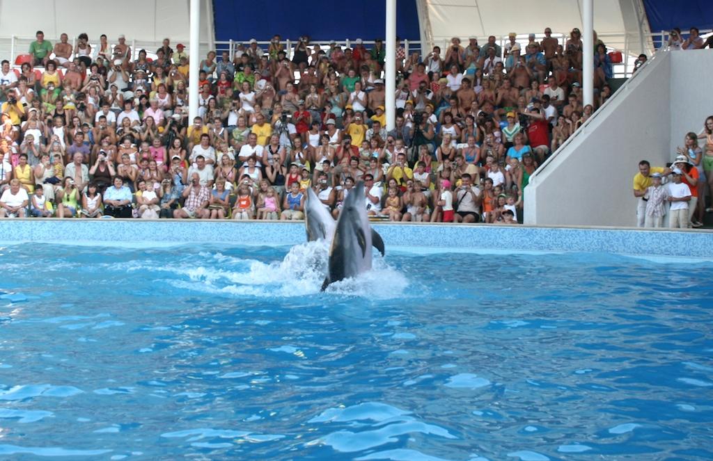 Шоу в крымском дельфинарии