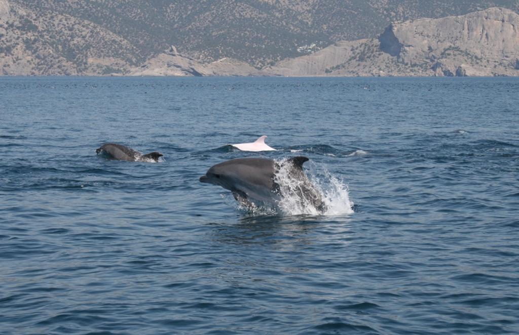 Дельфины сопровождают корабль