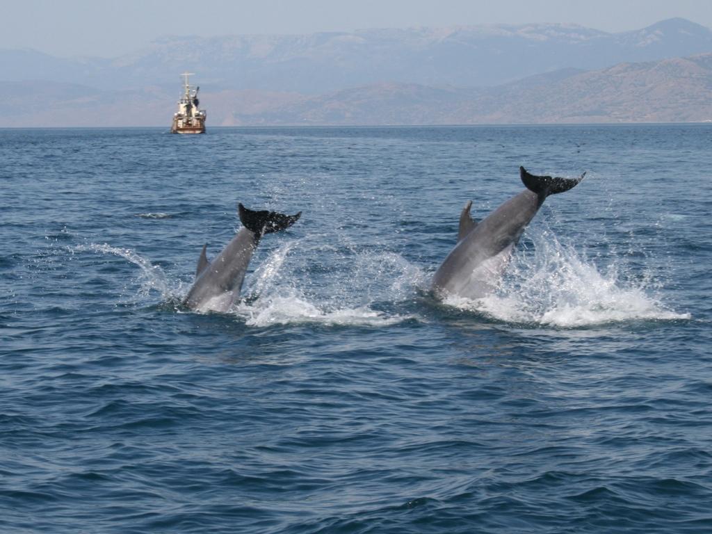 Интервью с тренером дельфинов