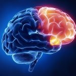 О здоровье и развитии мозга