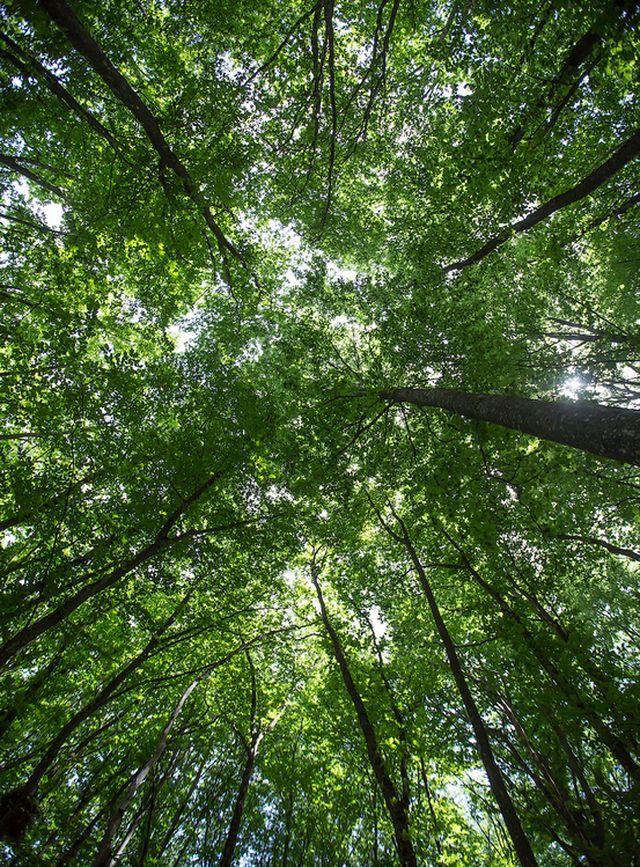 Буковый лес в крыму