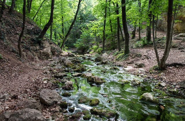 Река в буковом лесу