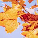Севастополь ожидает резкое похолодание