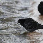 Коротко о погоде на выходные: «термическая депрессия» придет в Крым
