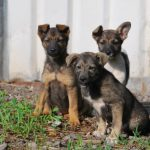 На Северной стороне Севастополя неизвестные выбросили на улицу щенков