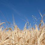 Сельхозпроизводителей признали пострадавшими во время пандемии