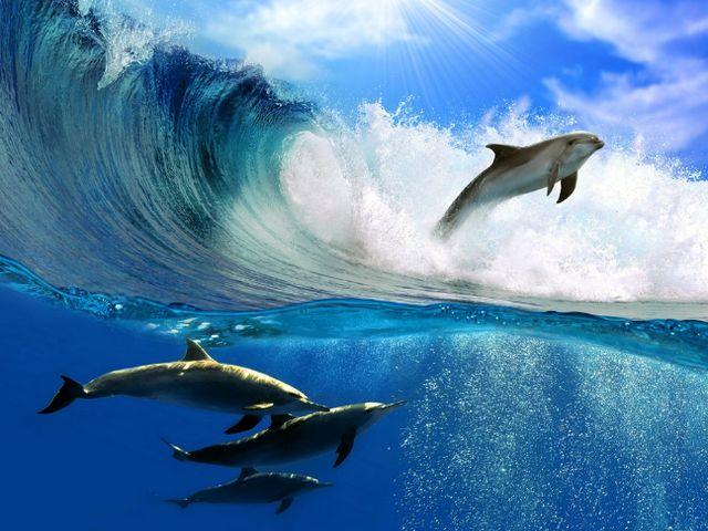Дельфины резвятся в море