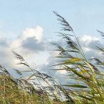 В Крыму предупредили об усилении ветра во вторник