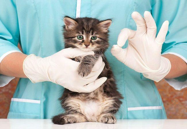 Терапия собак и кошек. Прием ветеринара терапевта в Москве