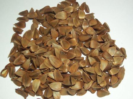 Буковые орешки