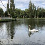 Аксенов анонсировал реконструкцию парка им. Гагарина в Симферополе