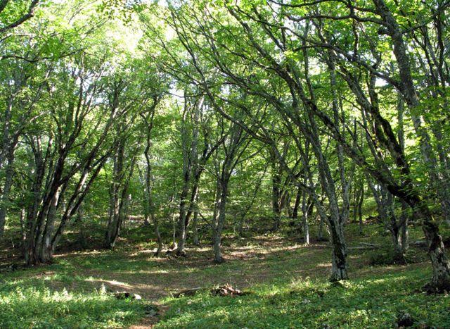 Опушка леса близ Карадага