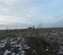 Лесозащитные полосы в Крыму