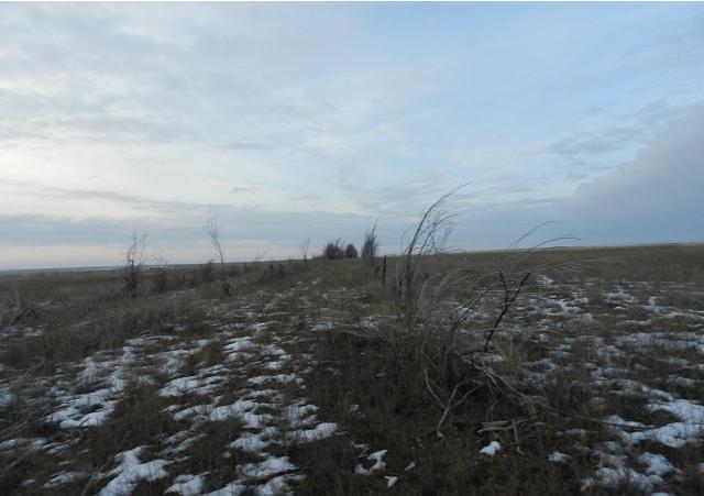 Защитные лесополосы степного Крыма — back to the future