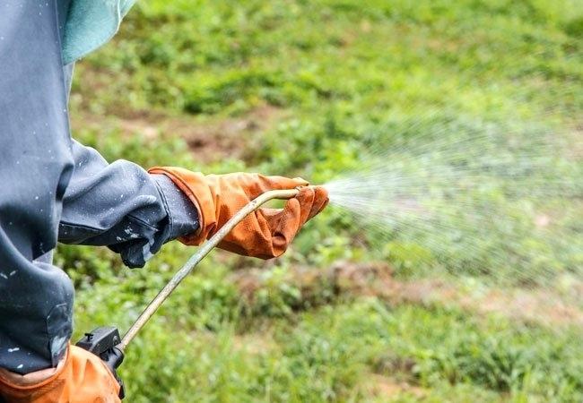 Инсектицидные химикаты. Необходимость применения