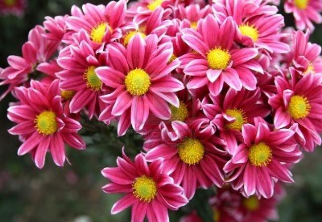 О любви, цветах и сюрпризах. Доставка цветов по Киеву