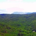 Прогулки по весенним Крымским лесам