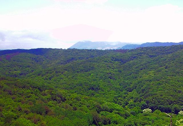 Крымские леса