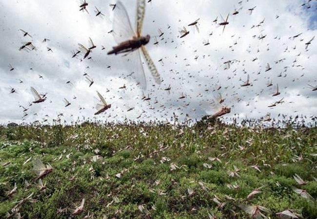 Уничтожение мух за 1 час, с гарантией в Москве и области