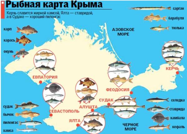 как ловить рыбу на черном море