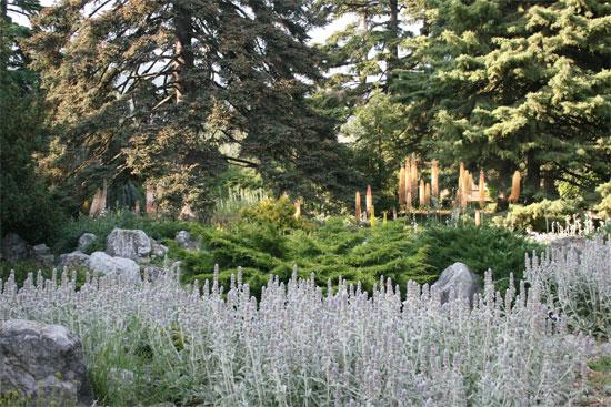 Уникальные растения ботанического сада