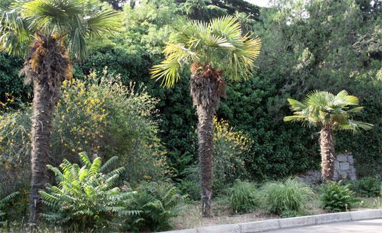 Первые ботанические сады в районе
