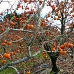 Крымские фрукты — польза и удовольствие