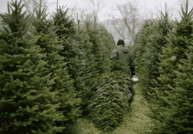 Искусственные елки в Екатеринбурге недорого