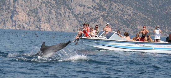 Дельфины не прочь попозировать перед фотокамерами