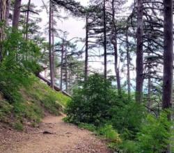 Тропы в Крымских лесах