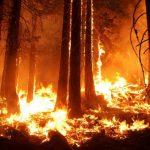 В Севастополе с начала года зафиксировано пять лесных пожаров
